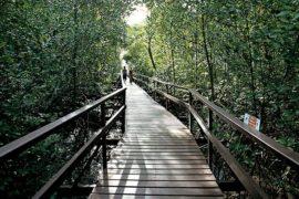 passeios-pela-natureza